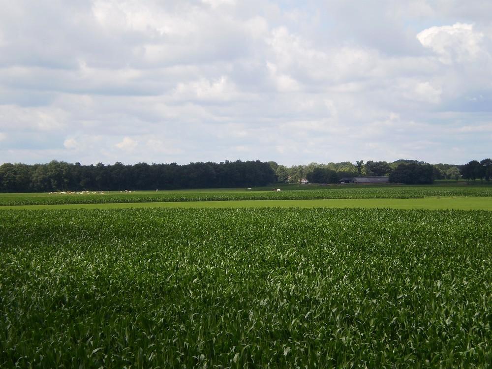 Landduin_'t Voorhuys (12)